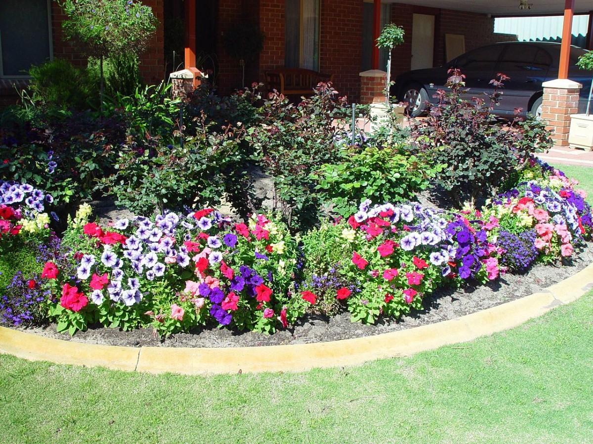 I fiori più semplici da coltivare su giardini e balconi